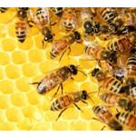 pszczołyslide.jpeg